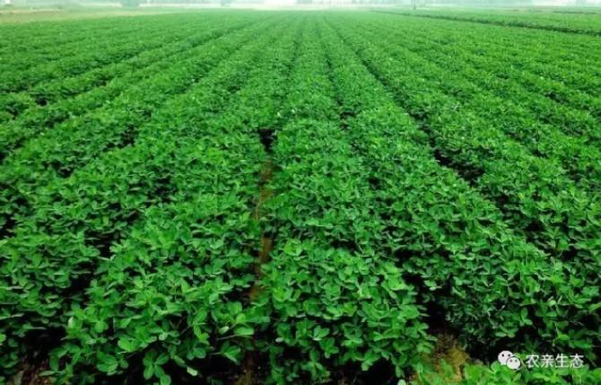 农亲富硒黑花生,农亲美食,农亲地域特产。