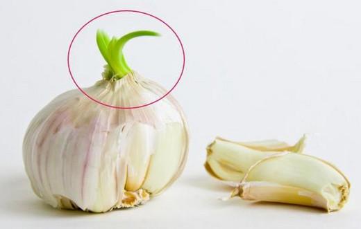 发芽的大蒜
